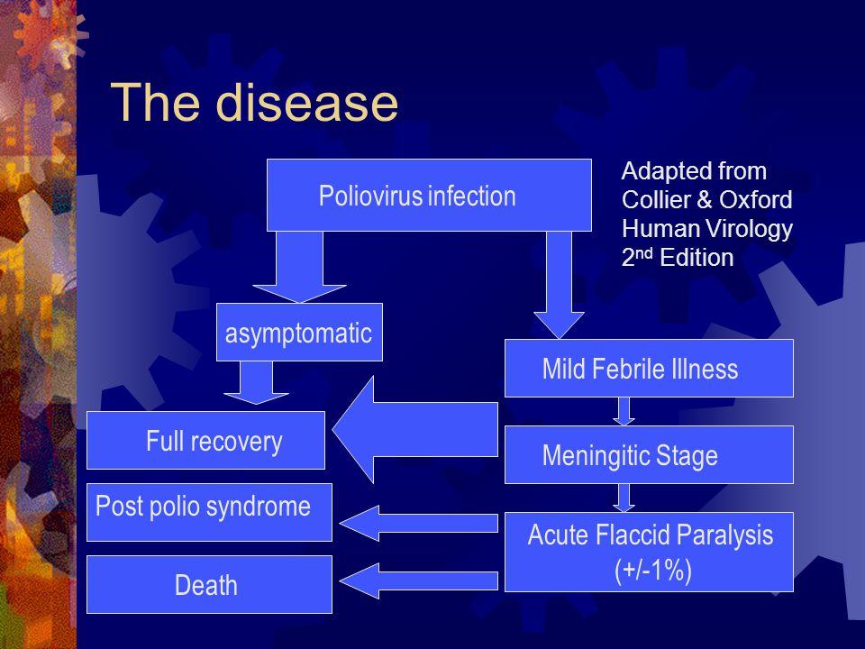 The disease Poliovirus infection asymptomatic Full recovery Mild Febrile Illness Meningitic Stage Acute Flaccid Paralysis (+/-1%) Death Post polio syn