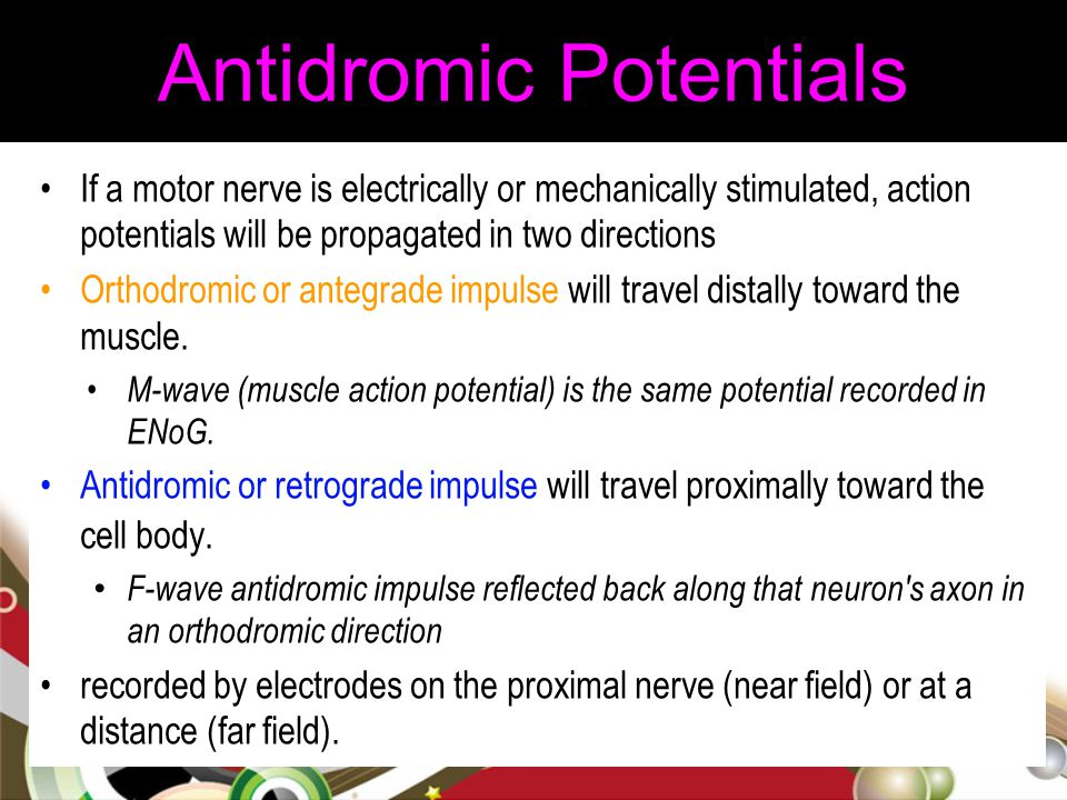 Antidromic Potentials If a motor nerve is electrically or mechanically stimulated, action potentials will be propagated in two directions Orthodromic