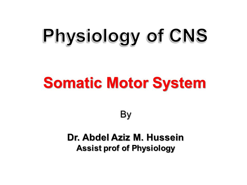 By Dr. Abdel Aziz M. Hussein Assist prof of Physiology Somatic Motor System