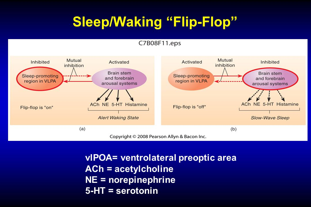 Sleep/Waking Flip-Flop vlPOA= ventrolateral preoptic area ACh = acetylcholine NE = norepinephrine 5-HT = serotonin