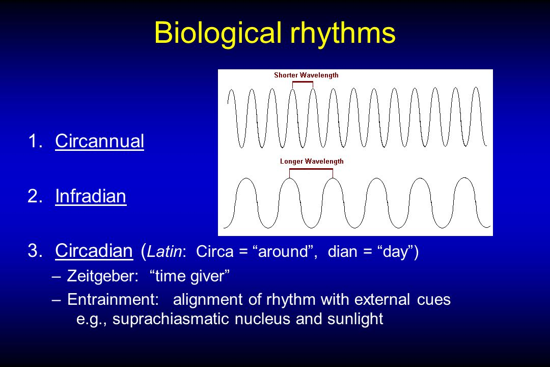 Biological rhythms 1.Circannual 2.Infradian 3.Circadian ( Latin: Circa = around , dian = day ) –Zeitgeber: time giver –Entrainment: alignment of rhythm with external cues e.g., suprachiasmatic nucleus and sunlight