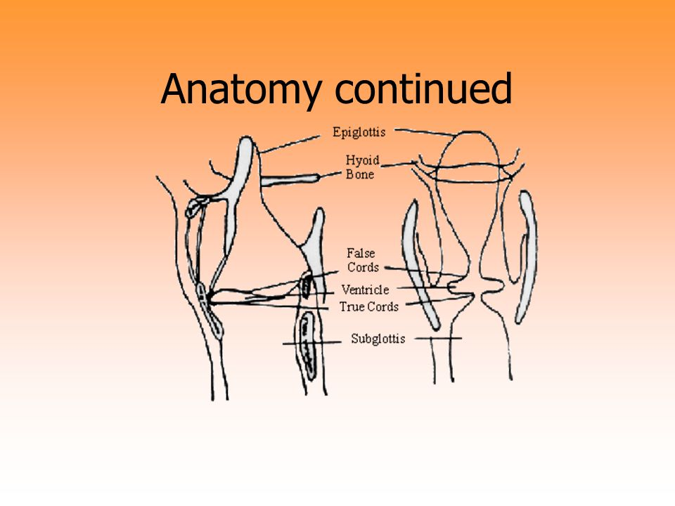 Mechanism of Injury Blunt Trauma-fractures/dislocation Penetrating Trauma Intubation Trauma Thermal and Chemical Trauma
