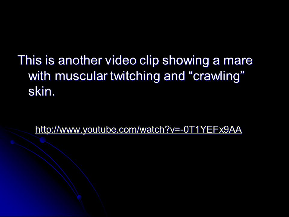 This is another video clip showing a mare with muscular twitching and crawling skin.