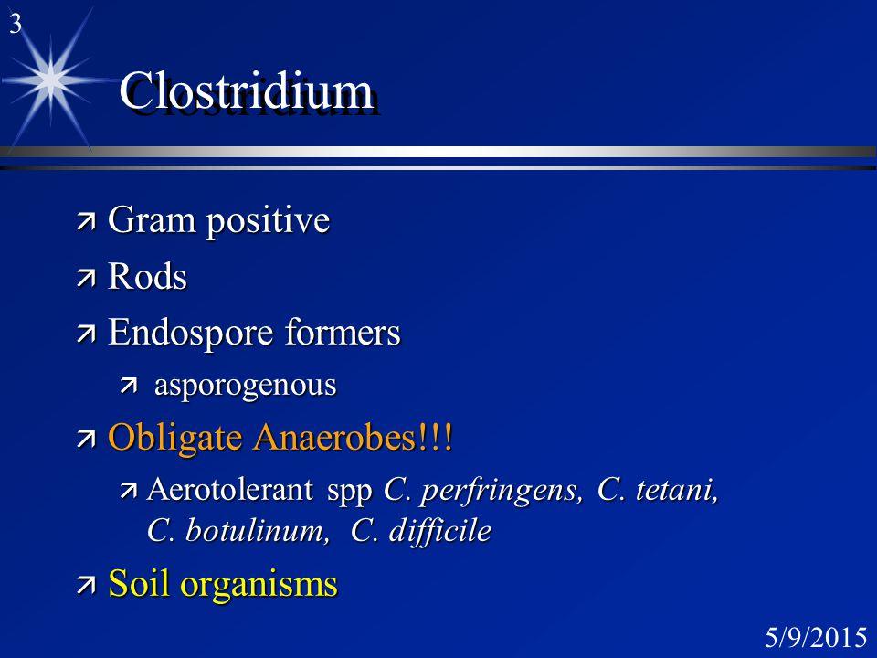 2 5/9/2015 Clostridial Diseases ä Botulism C. botulinum ä Tetanus C.