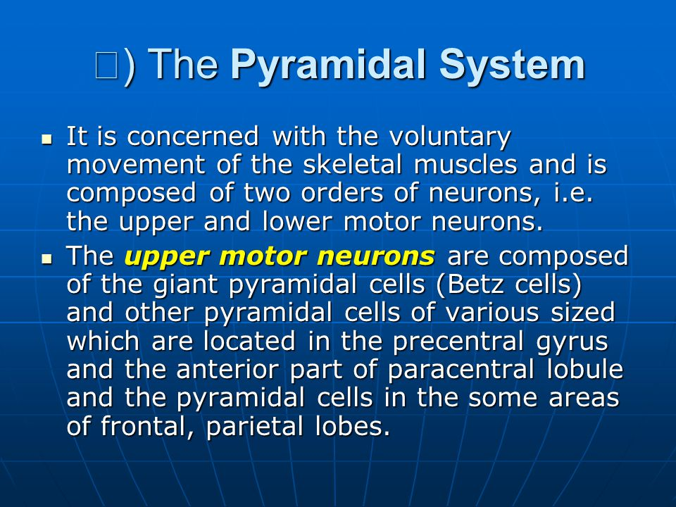 Ⅰ ) The Pyramidal System It is concerned with the voluntary movement of the skeletal muscles and is composed of two orders of neurons, i.e.