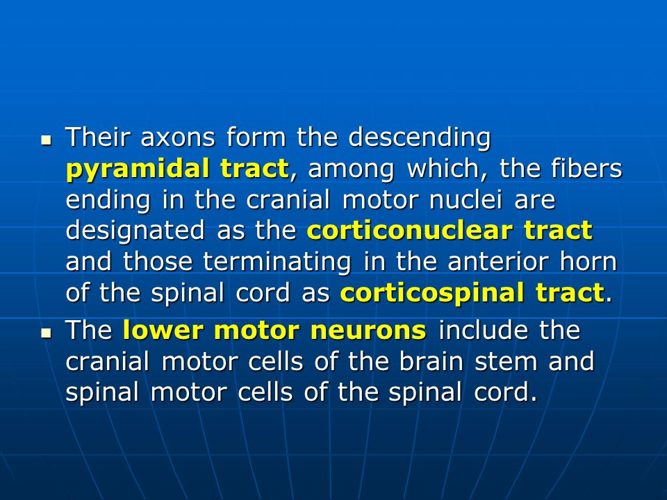Their axons form the descending pyramidal tract, among which, the fibers ending in the cranial motor nuclei are designated as the corticonuclear tract and those terminating in the anterior horn of the spinal cord as corticospinal tract.