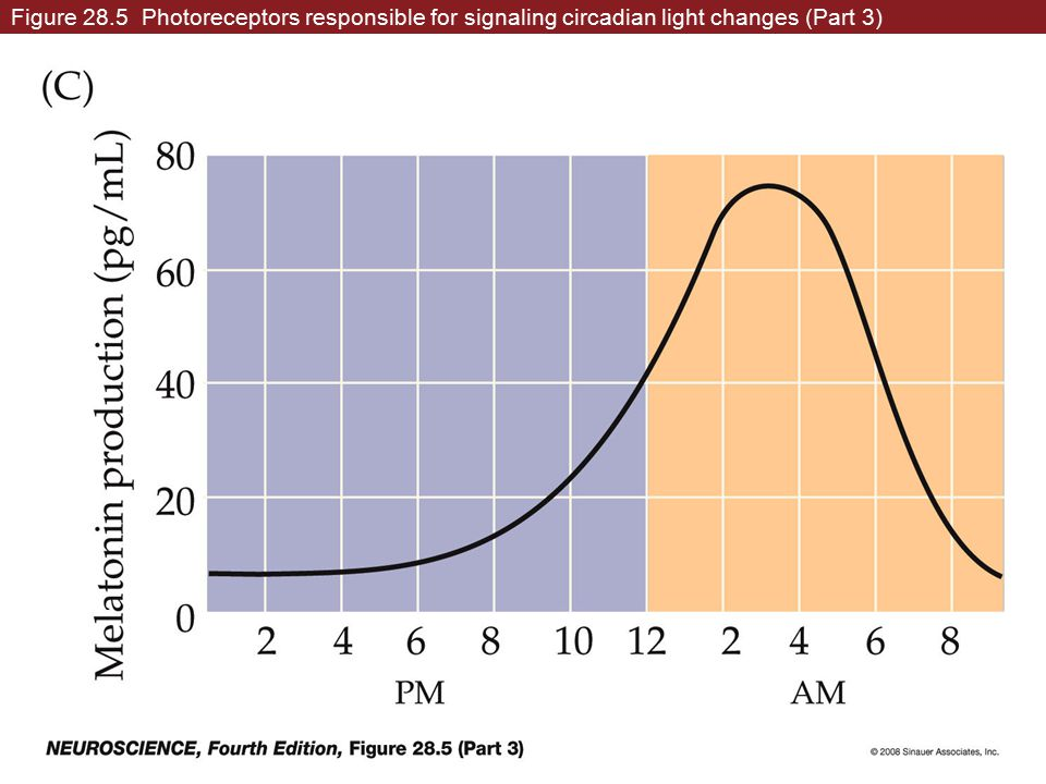 Figure 28.5 Photoreceptors responsible for signaling circadian light changes (Part 3)