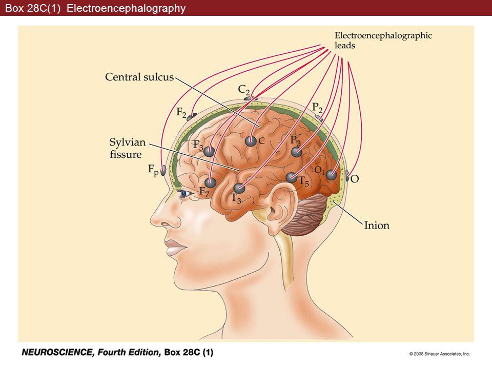 Box 28C(1) Electroencephalography