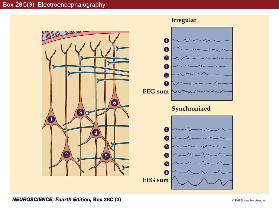 Box 28C(3) Electroencephalography