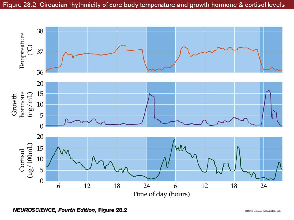 Figure 28.2 Circadian rhythmicity of core body temperature and growth hormone & cortisol levels