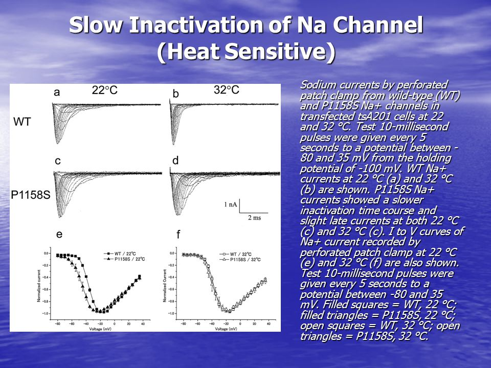 Slow Inactivation of Na Channel (Heat Sensitive) Sodium currents by perforated patch clamp from wild-type (WT) and P1158S Na+ channels in transfected