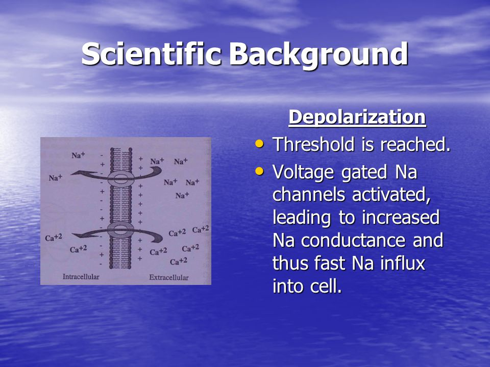 Scientific Background Depolarization Threshold is reached. Threshold is reached. Voltage gated Na channels activated, leading to increased Na conducta