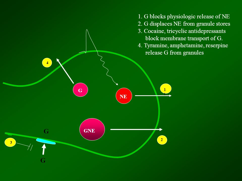 G NE GNE 1 2 G G 3 4 1. G blocks physiologic release of NE 2.