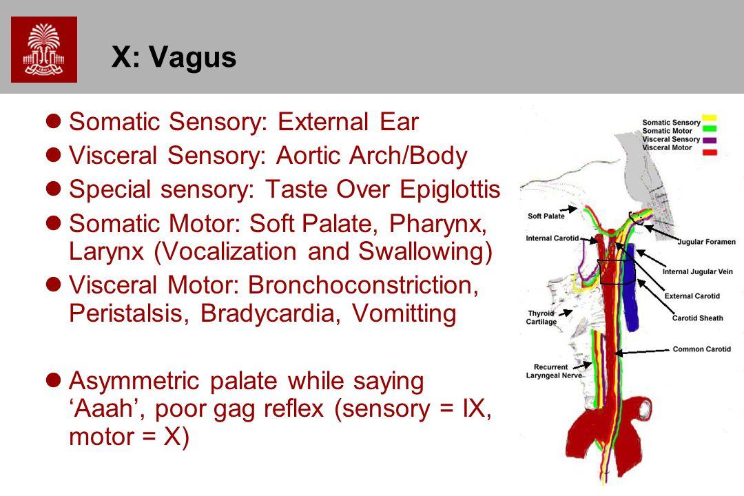 15 X: Vagus Somatic Sensory: External Ear Visceral Sensory: Aortic Arch/Body Special sensory: Taste Over Epiglottis Somatic Motor: Soft Palate, Pharyn