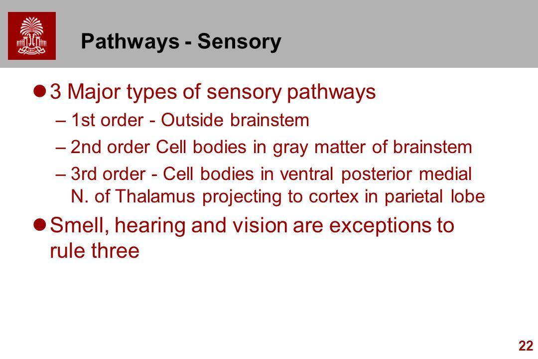 22 Pathways - Sensory 3 Major types of sensory pathways –1st order - Outside brainstem –2nd order Cell bodies in gray matter of brainstem –3rd order -