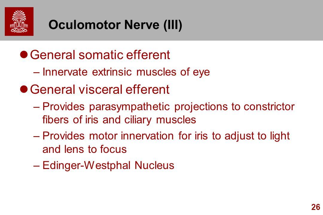 26 Oculomotor Nerve (III) General somatic efferent –Innervate extrinsic muscles of eye General visceral efferent –Provides parasympathetic projections