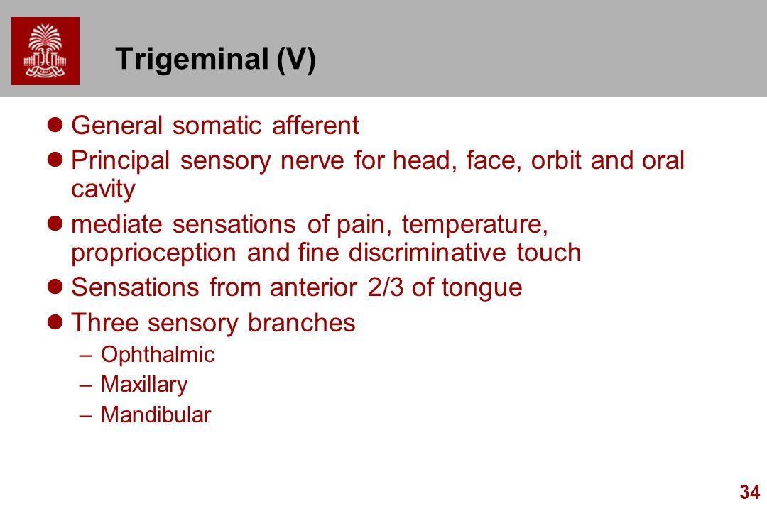 34 Trigeminal (V) General somatic afferent Principal sensory nerve for head, face, orbit and oral cavity mediate sensations of pain, temperature, prop