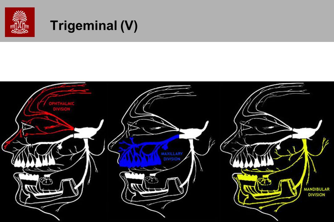 35 Trigeminal (V)