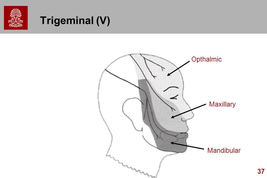 37 Trigeminal (V) Opthalmic Mandibular Maxillary
