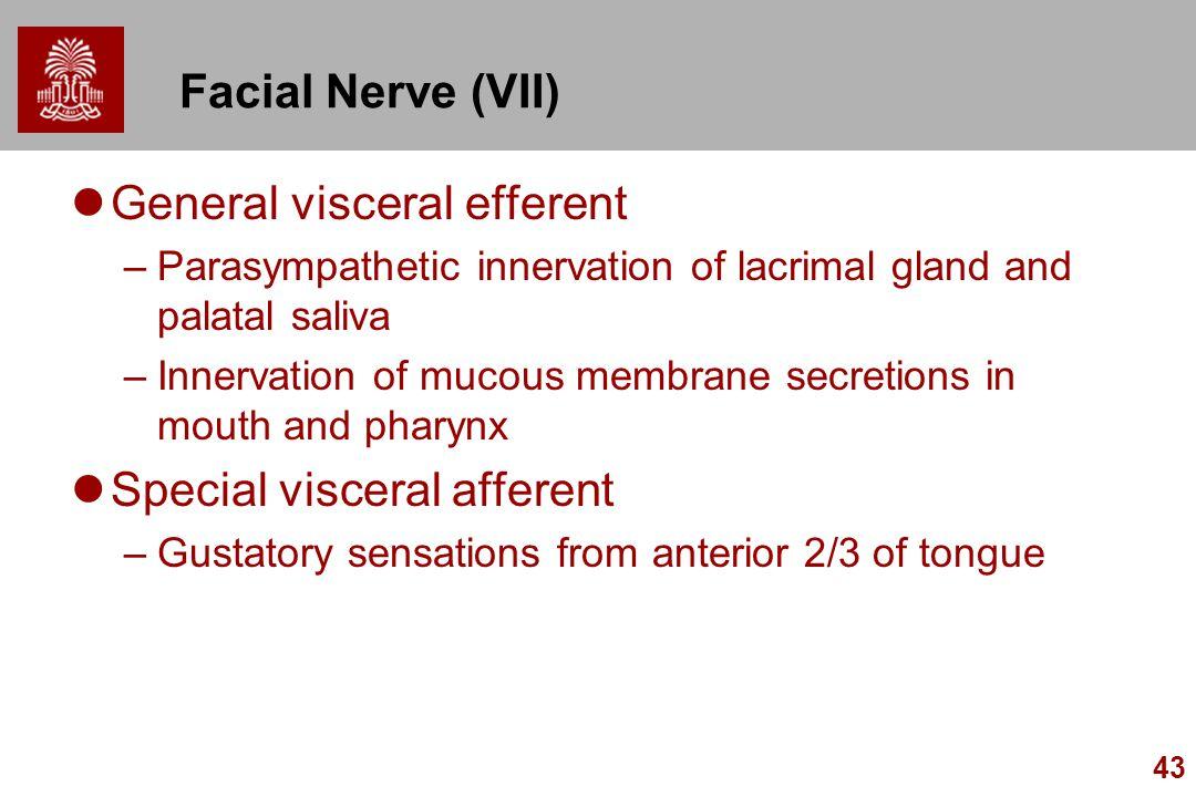 43 Facial Nerve (VII) General visceral efferent –Parasympathetic innervation of lacrimal gland and palatal saliva –Innervation of mucous membrane secr
