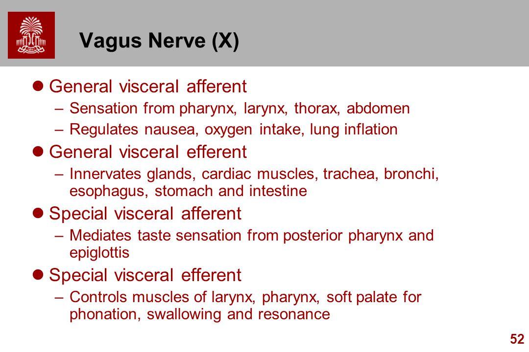 52 Vagus Nerve (X) General visceral afferent –Sensation from pharynx, larynx, thorax, abdomen –Regulates nausea, oxygen intake, lung inflation General