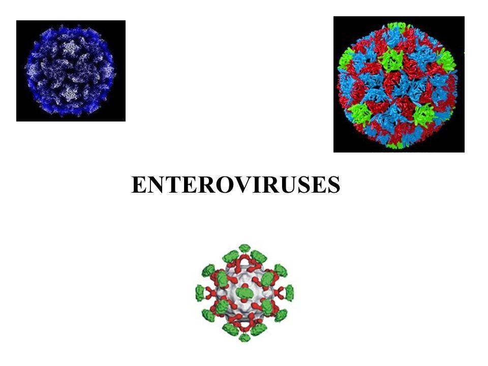 Molecular Biology Belong to picornaviridae family –Aphthoviruses, enteroviruses, cardioviruses, rhinoviruses 4 subgroups –Polioviruses, coxsackieviruses, echoviruses, newer enteroviruses Non-enveloped, single-stranded, positive sense RNA viruses Enter through the gastrointestinal tract