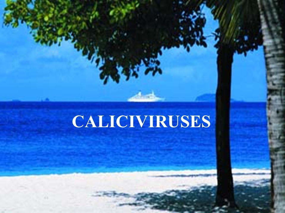 Caliciviruses