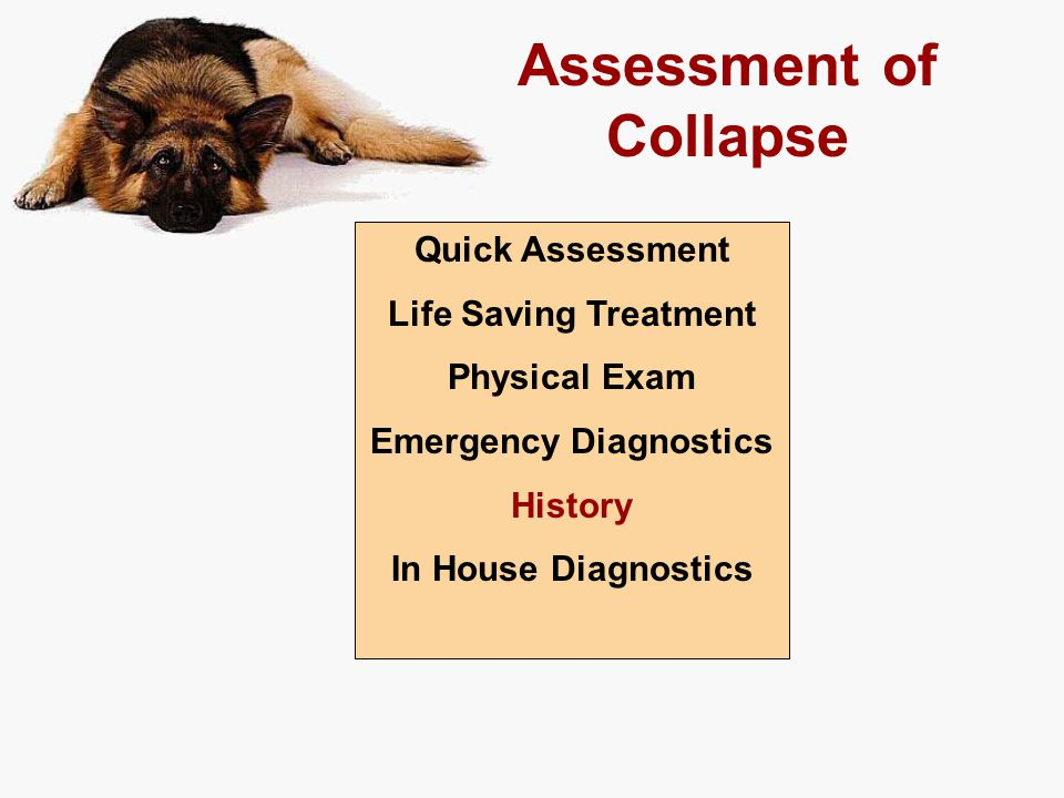 Assessment of Collapse Quick Assessment Life Saving Treatment Physical Exam Emergency Diagnostics History In House Diagnostics