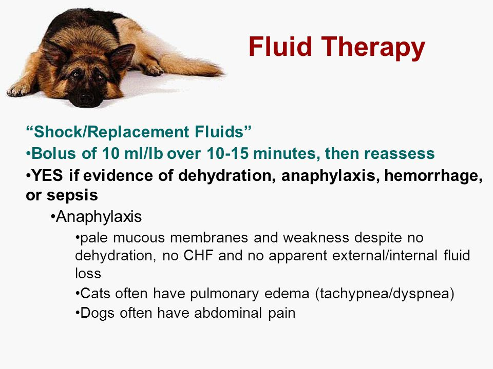"Fluid Therapy ""Shock/Replacement Fluids"" Bolus of 10 ml/lb over 10-15 minutes, then reassess YES if evidence of dehydration, anaphylaxis, hemorrhage,"