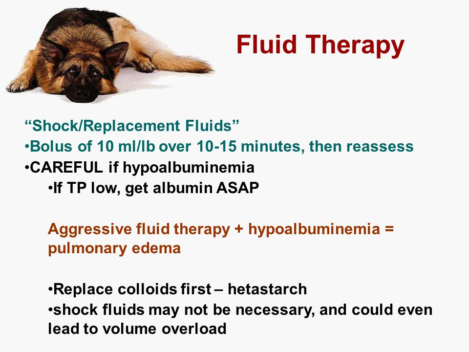 "Fluid Therapy ""Shock/Replacement Fluids"" Bolus of 10 ml/lb over 10-15 minutes, then reassess CAREFUL if hypoalbuminemia If TP low, get albumin ASAP Ag"