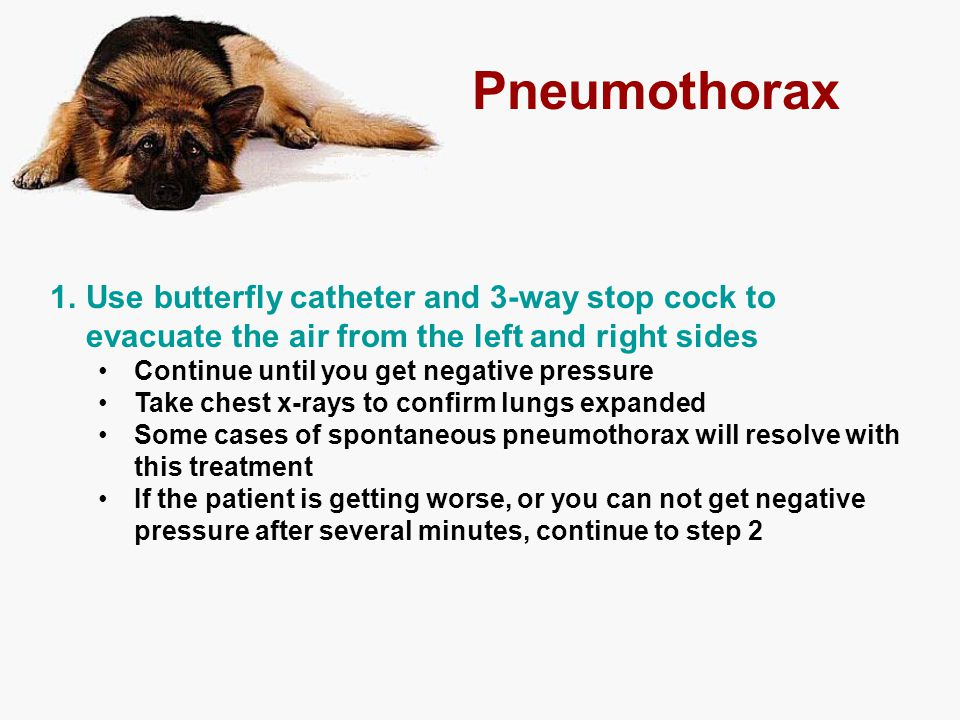Pneumothorax 1.Use butterfly catheter and 3-way stop cock to evacuate the air from the left and right sides Continue until you get negative pressure T