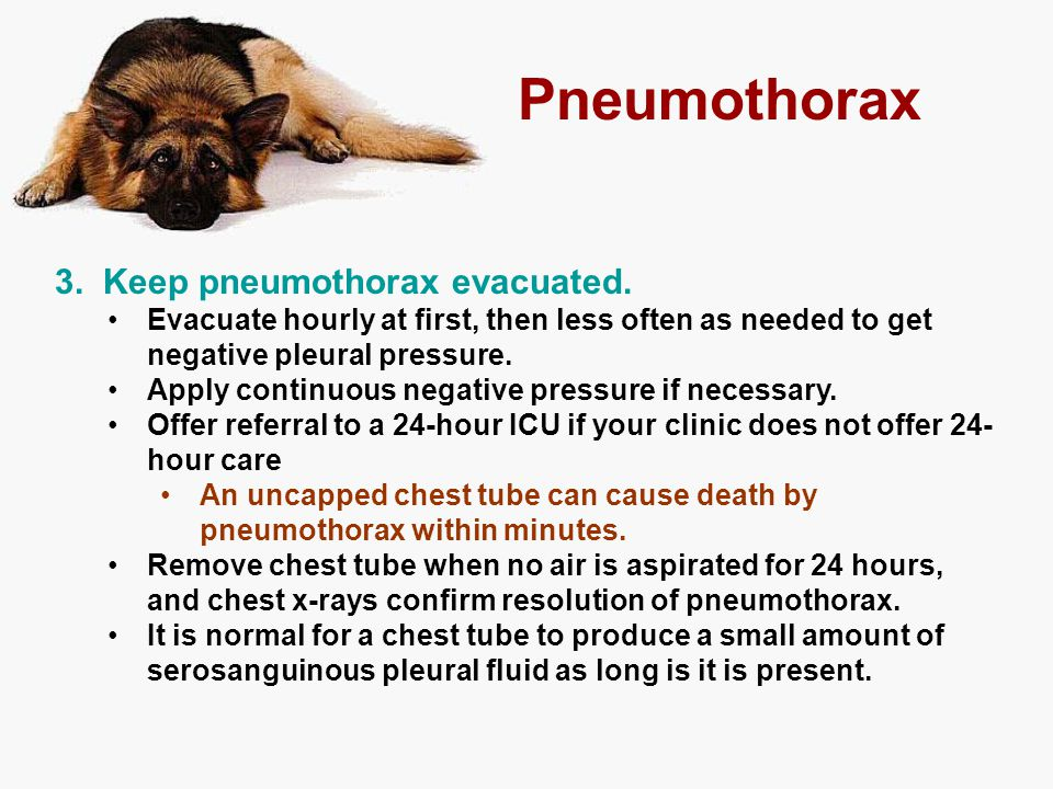 Pneumothorax 3. Keep pneumothorax evacuated. Evacuate hourly at first, then less often as needed to get negative pleural pressure. Apply continuous ne