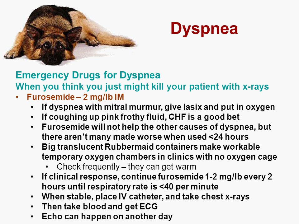 Dyspnea Emergency Drugs for Dyspnea When you think you just might kill your patient with x-rays Furosemide – 2 mg/lb IM If dyspnea with mitral murmur,