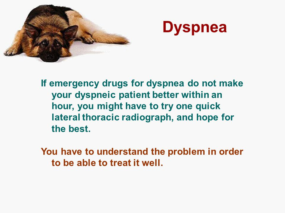 Dyspnea If emergency drugs for dyspnea do not make your dyspneic patient better within an hour, you might have to try one quick lateral thoracic radio