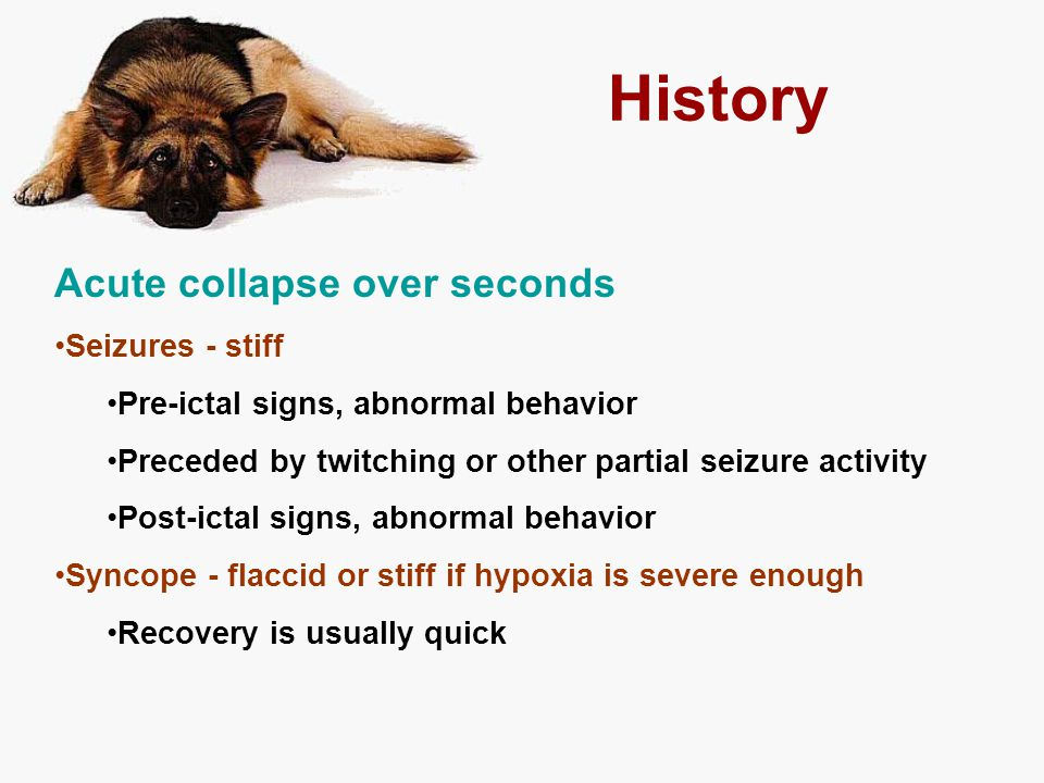 History Acute collapse over seconds Seizures - stiff Pre-ictal signs, abnormal behavior Preceded by twitching or other partial seizure activity Post-i