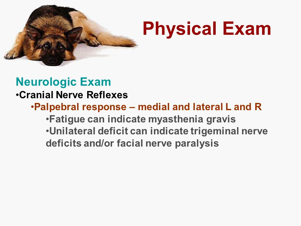 Physical Exam Neurologic Exam Cranial Nerve Reflexes Palpebral response – medial and lateral L and R Fatigue can indicate myasthenia gravis Unilateral