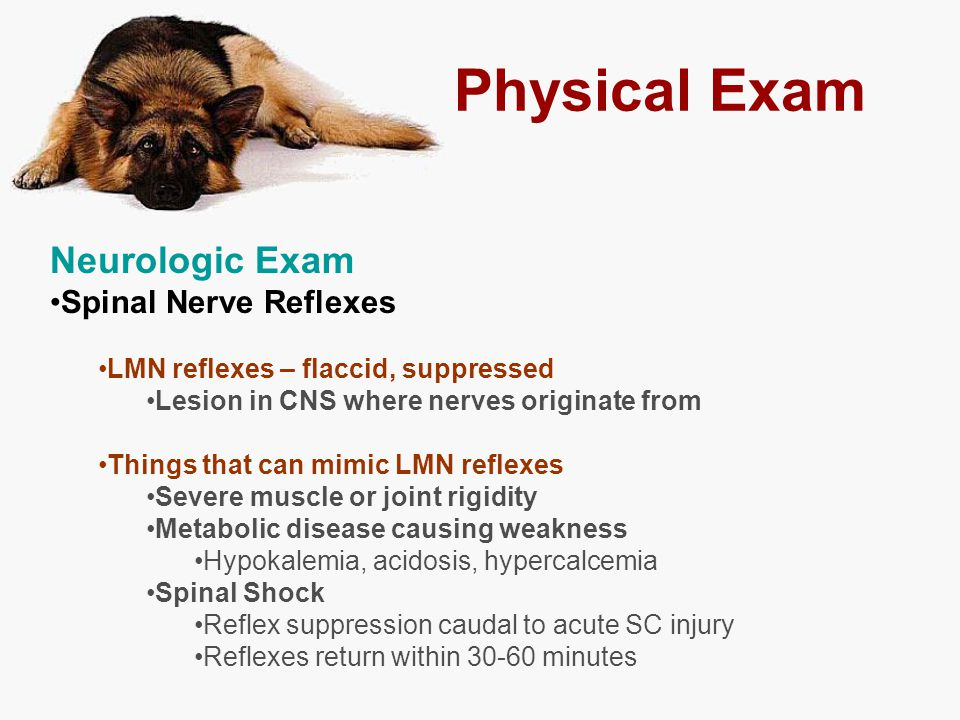 Physical Exam Neurologic Exam Spinal Nerve Reflexes LMN reflexes – flaccid, suppressed Lesion in CNS where nerves originate from Things that can mimic