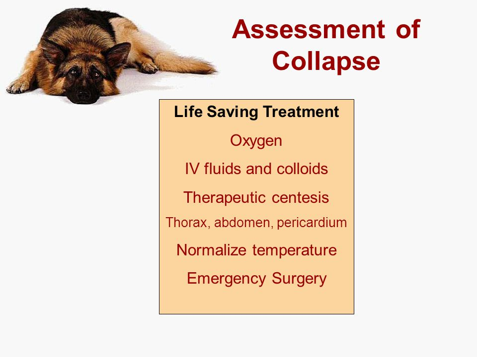 Assessment of Collapse Life Saving Treatment Oxygen IV fluids and colloids Therapeutic centesis Thorax, abdomen, pericardium Normalize temperature Eme