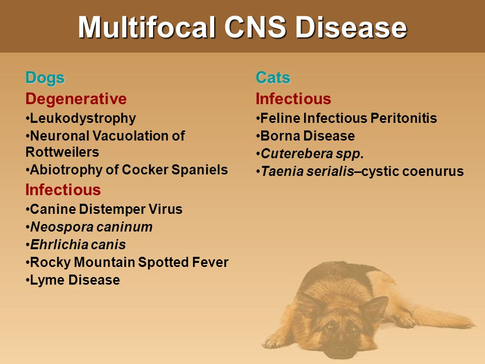Multifocal CNS Disease Dogs Degenerative Leukodystrophy Neuronal Vacuolation of Rottweilers Abiotrophy of Cocker Spaniels Infectious Canine Distemper