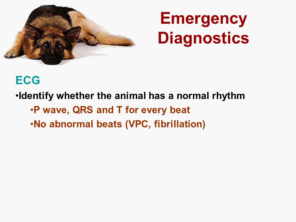 Emergency Diagnostics ECG Identify whether the animal has a normal rhythm P wave, QRS and T for every beat No abnormal beats (VPC, fibrillation)