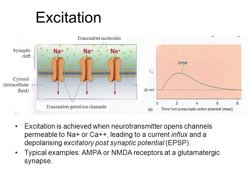 Excitation Excitation is achieved when neurotransmitter opens channels permeable to Na+ or Ca++, leading to a current influx and a depolarising excitatory post synaptic potential (EPSP).