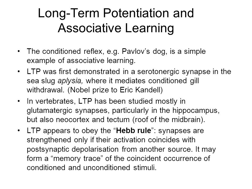 Long-Term Potentiation and Associative Learning The conditioned reflex, e.g.