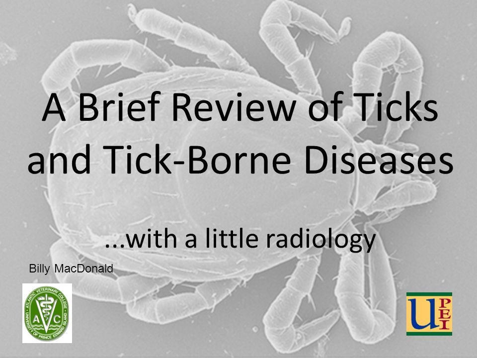 A Brief Review of Ticks and Tick-Borne Diseases...with a little radiology Billy MacDonald