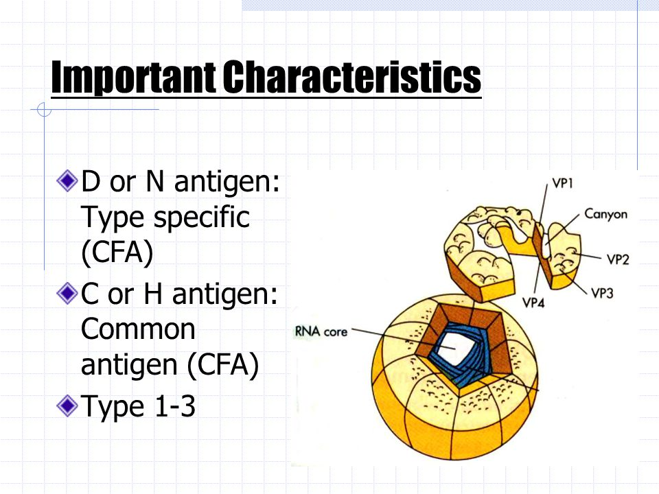 D or N antigen: Type specific (CFA) C or H antigen: Common antigen (CFA) Type 1-3