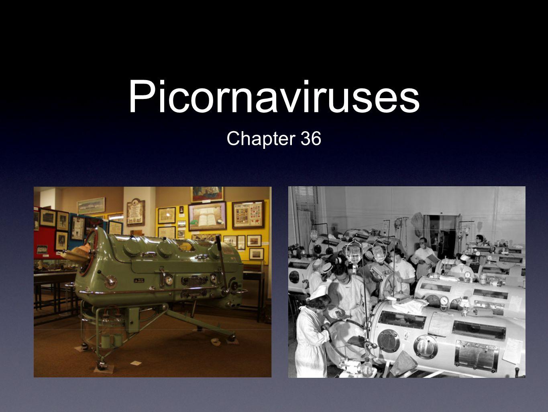 Picornaviruses Chapter 36