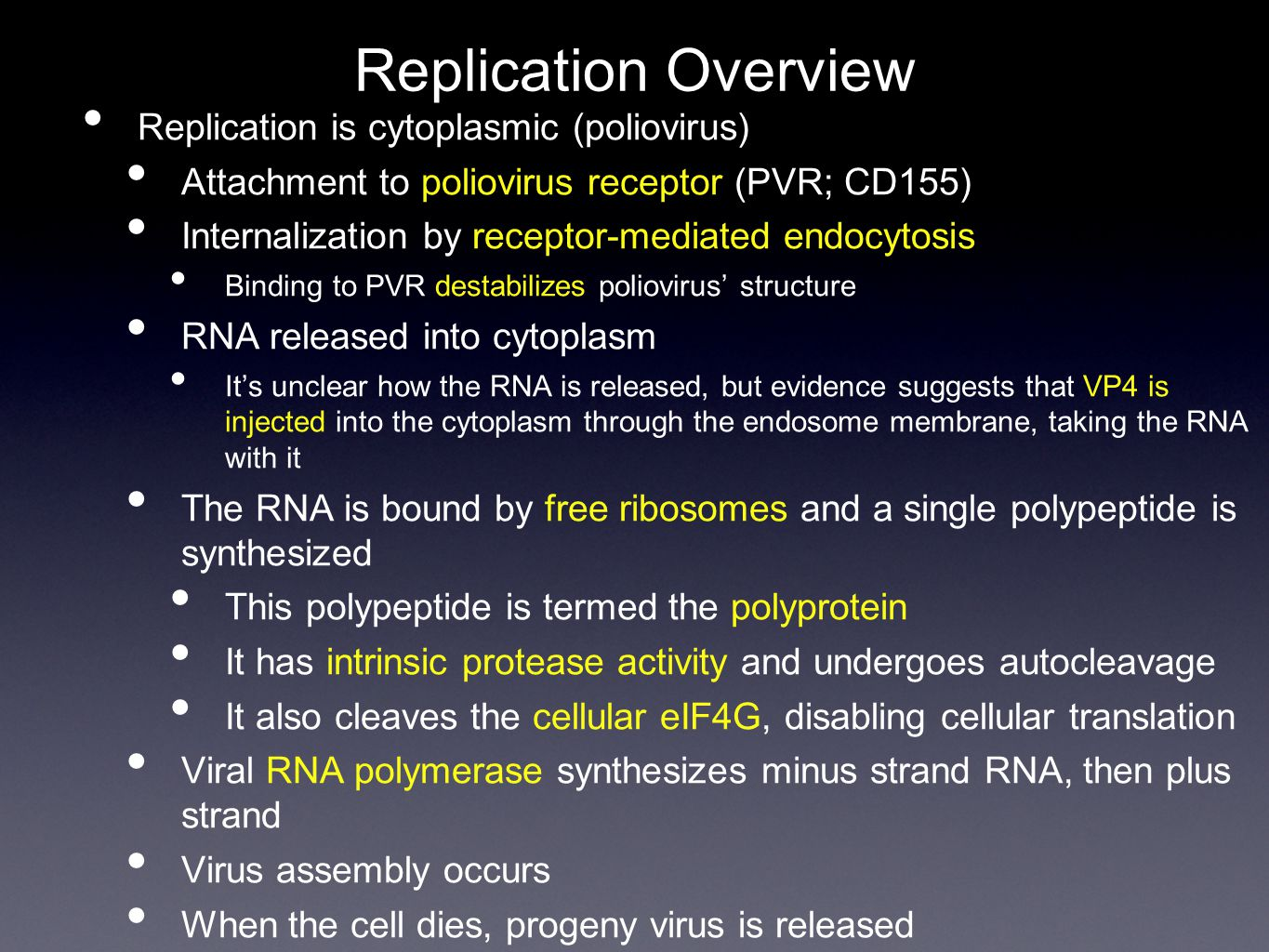 Replication Overview Replication is cytoplasmic (poliovirus) Attachment to poliovirus receptor (PVR; CD155) Internalization by receptor-mediated endocytosis Binding to PVR destabilizes poliovirus' structure RNA released into cytoplasm It's unclear how the RNA is released, but evidence suggests that VP4 is injected into the cytoplasm through the endosome membrane, taking the RNA with it The RNA is bound by free ribosomes and a single polypeptide is synthesized This polypeptide is termed the polyprotein It has intrinsic protease activity and undergoes autocleavage It also cleaves the cellular eIF4G, disabling cellular translation Viral RNA polymerase synthesizes minus strand RNA, then plus strand Virus assembly occurs When the cell dies, progeny virus is released