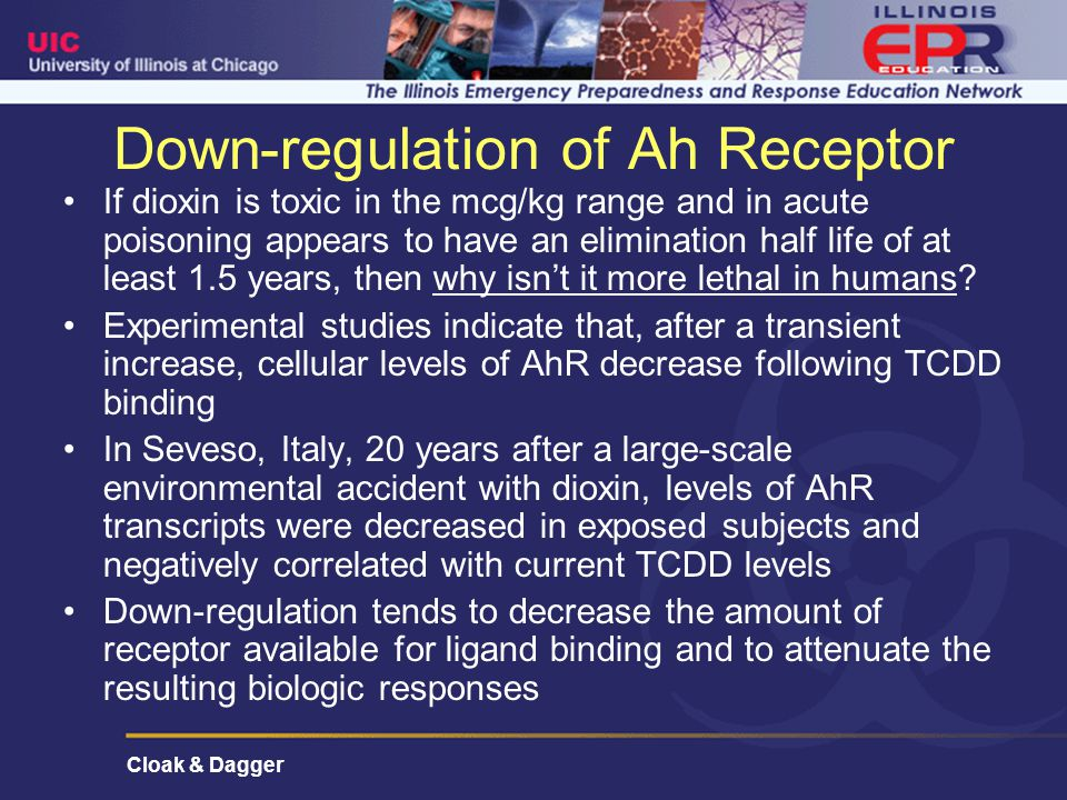 Cloak & Dagger Down-regulation of Ah Receptor If dioxin is toxic in the mcg/kg range and in acute poisoning appears to have an elimination half life of at least 1.5 years, then why isn't it more lethal in humans.