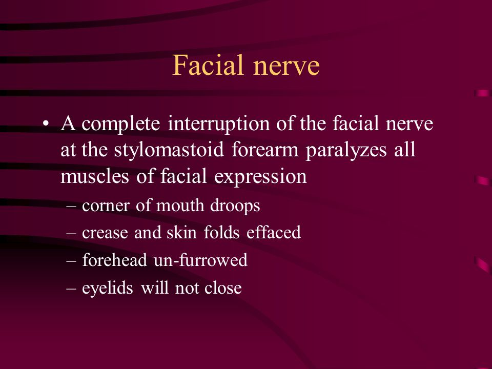 Facial nerve A complete interruption of the facial nerve at the stylomastoid forearm paralyzes all muscles of facial expression –corner of mouth droop