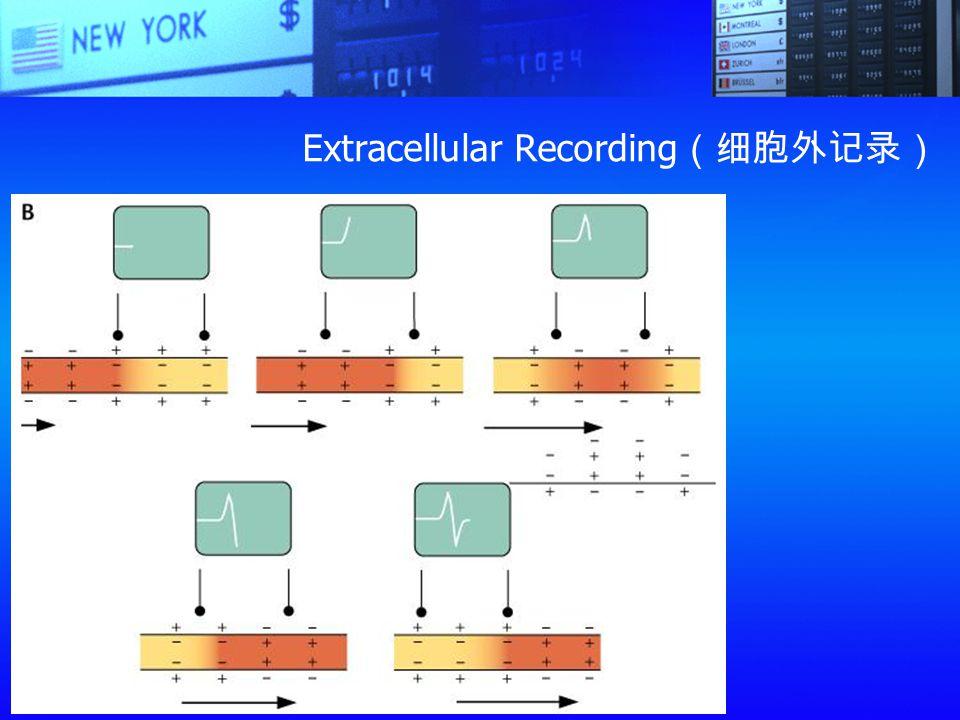 Extracellular Recording (细胞外记录)
