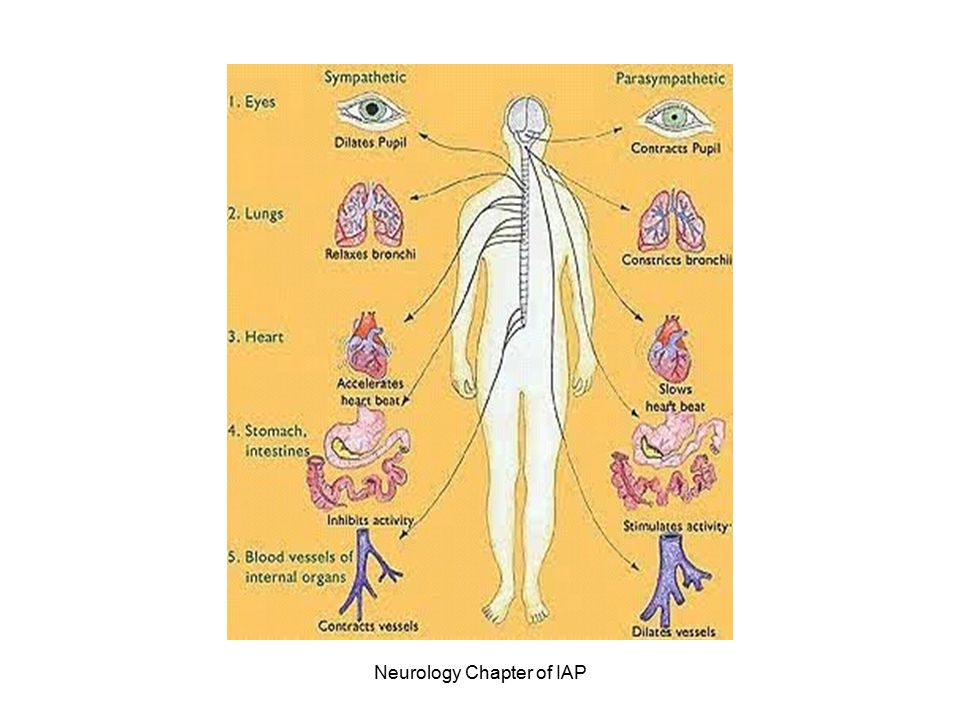 Guillain-Barre' T-cell sensitization occurs which causes loss of myelin which disrupts nerve impulses Loss of myelin, edema and inflammation of the affected nerves, causes a loss of neurotransmission to the periphery.